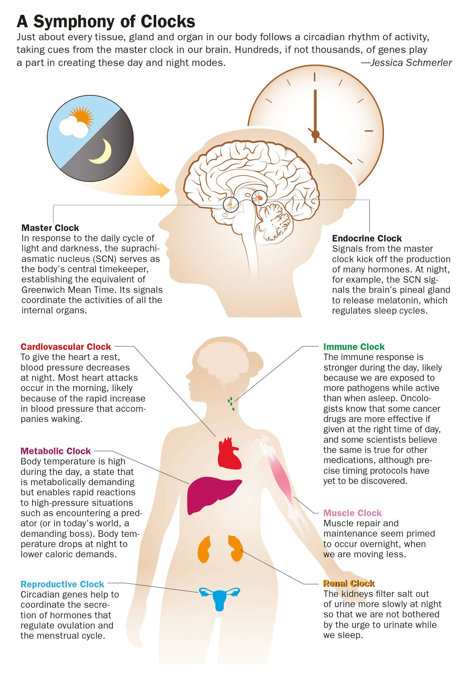 sleep and body function Find out what happens when you sleep at night and how it's affecting your daily  life.