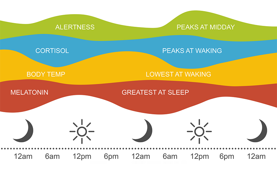 the optimal levels of melatonin and cortisol throughout the day