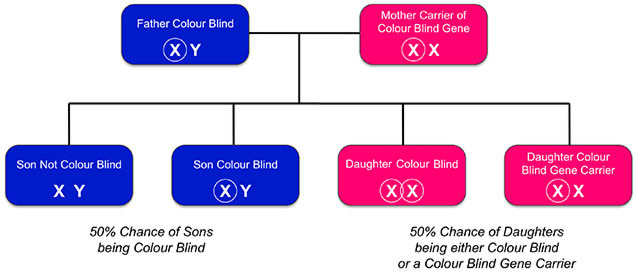 How The Red Green Colorblind Tests Works For Kids Iris