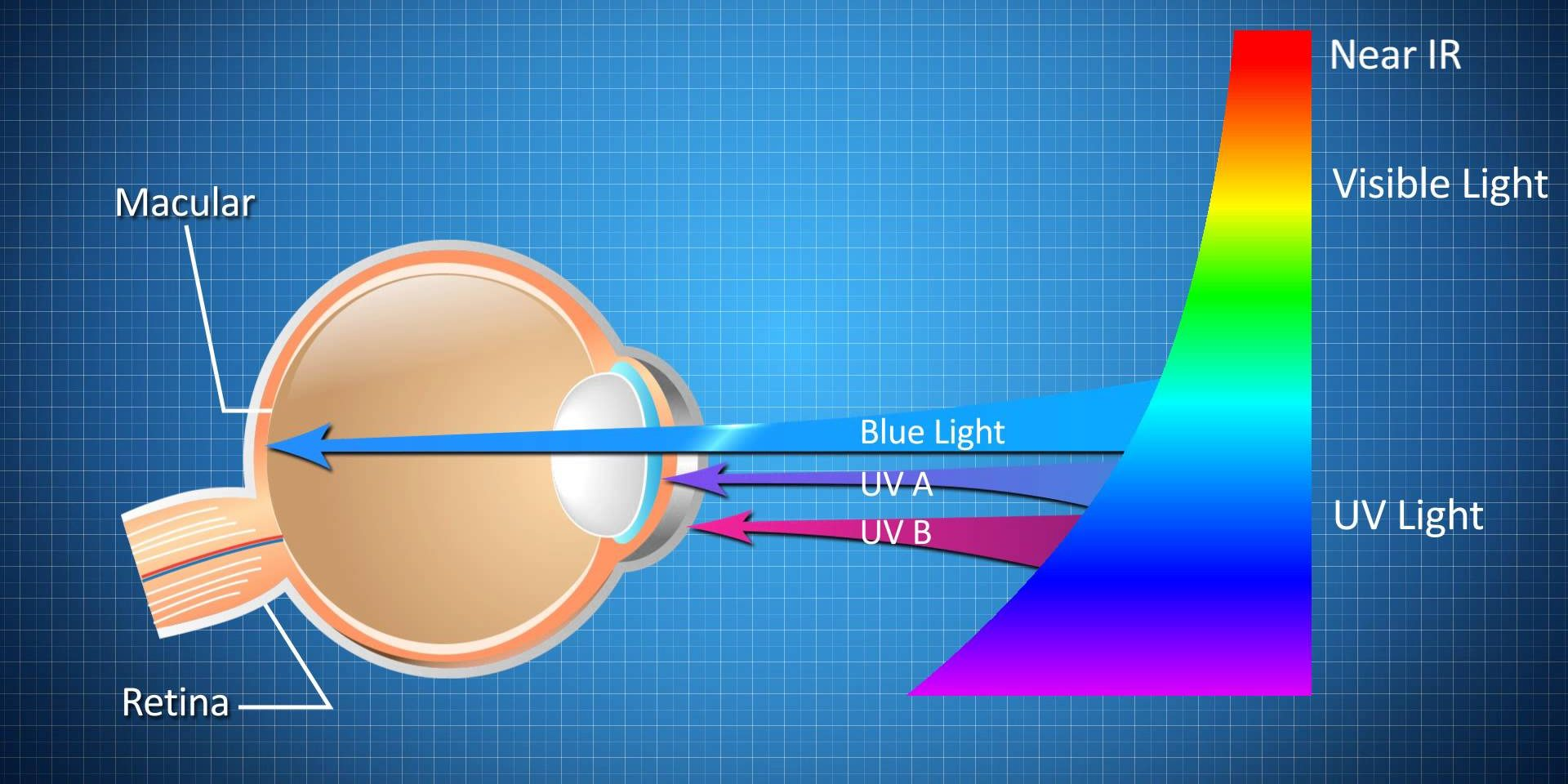 blue light effect on eye protection uv light retina damage eye harm