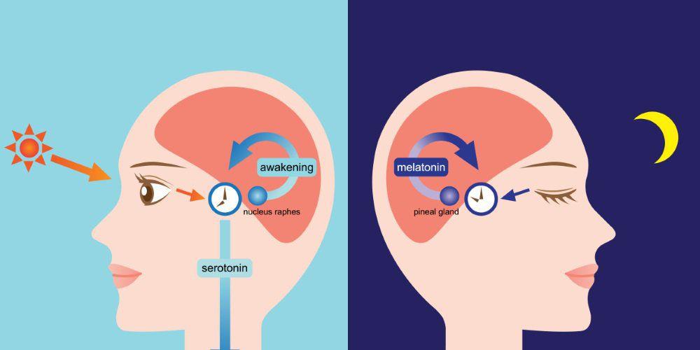 blue-light-circadian-rhythm-iris-software-avoid-headache